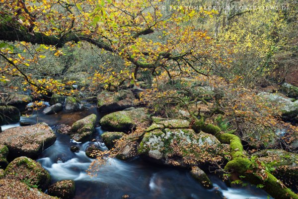 bretonischer Bachlauf im Herbst