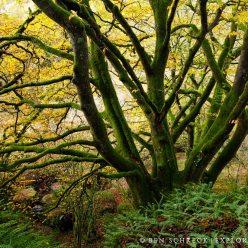 Foret bretonne Autumn