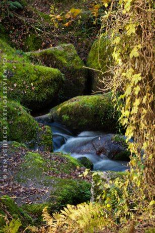 Herbst im Wald Detail