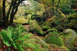 mystischer Wald Huelgout Bretagne