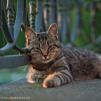 getigerte Katze auf der Terrasse