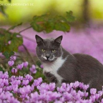 graue Katze in Blumen