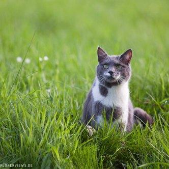 staunende Katze Katzen Fotos