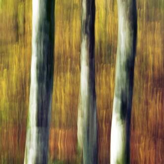 Baumstämme im Herbst