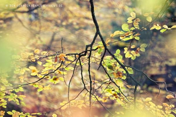 Farb Impression Wald Cerisy Calvados 9477