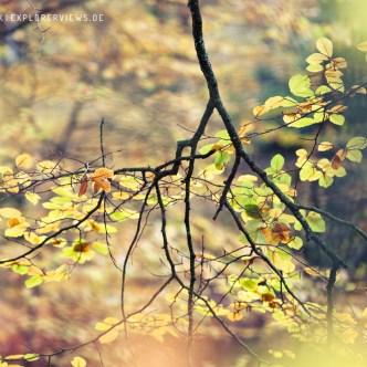 Farb Impression Wald Cerisy Calvados