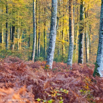 Herbst im Calvados Normandie