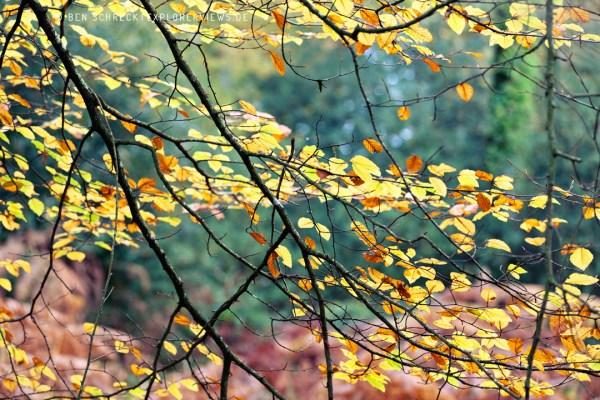 Herbst Impression Wald Cerisy Calvados 9454