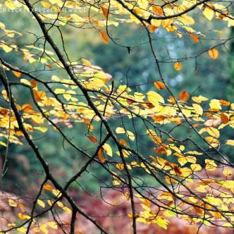 Herbst Impression Wald Cerisy Calvados