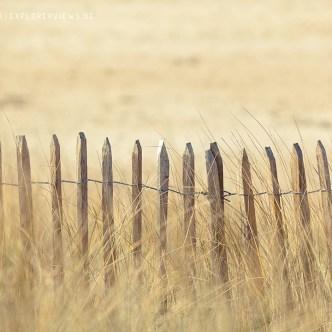 Holzzaun in den Dünen