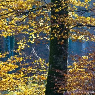 Wald im Herbstkleid