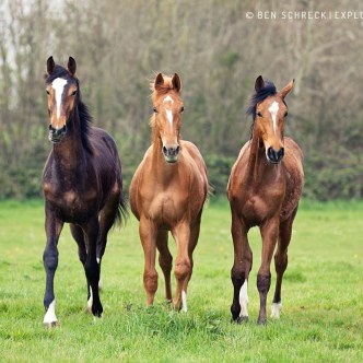 Horses Normandie