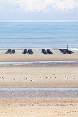 Austern Utah Beach Normandie 7215