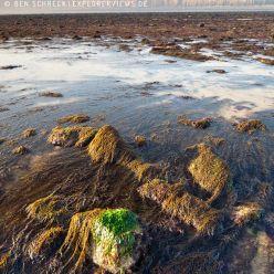 Küste bei Ebbe 9533