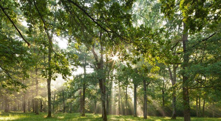 Wandkalender Bäume