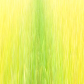 Pfad durchs Getreidefeld 4833