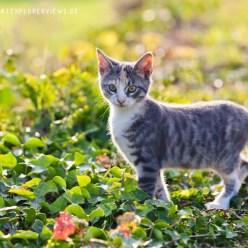 Bunte Katze herbstlich 8575