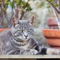 Katze auf Gartentisch 3547