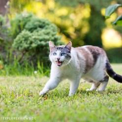 Katze im Garten Abends 3493