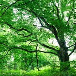 Cotentin Wald 5448