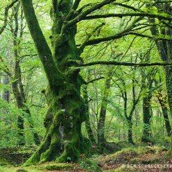 Magische Bäume HerbstwaldWald Normandie 9026