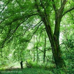 Normandie Wald 5418