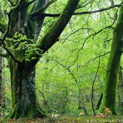 Herbst Wald Normandie 9012