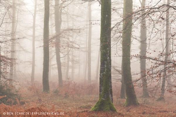 Bäume im Nebelwald 0219