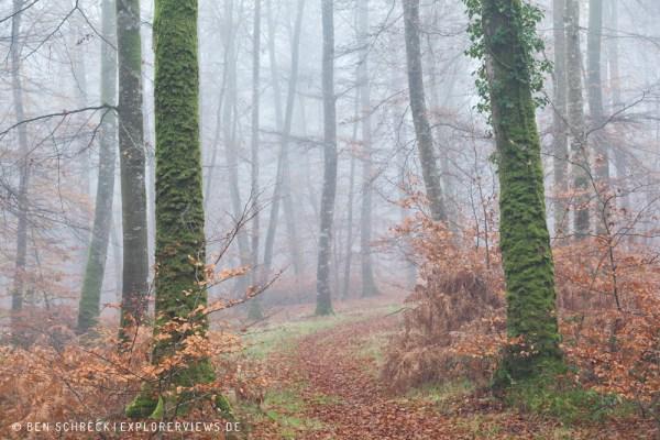 Bäume im Wald 0259