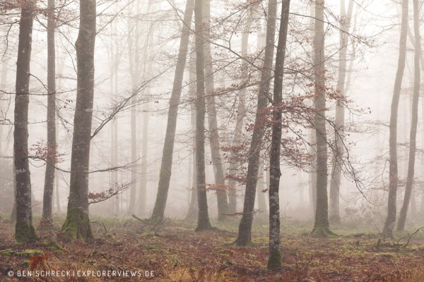 Landschaftsfotografie Herbstwald im Nebel Normandie 0235