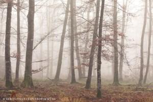 Herbstwald im Nebel Normandie 0235