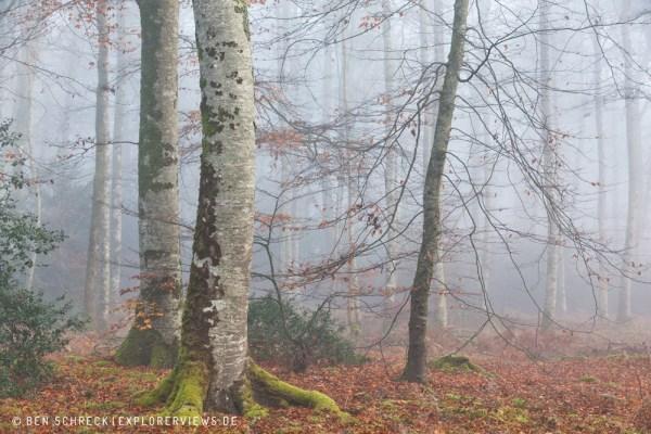 Herbstwald im Nebel 0238