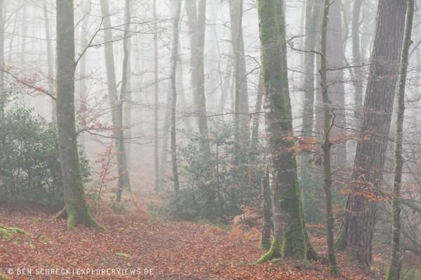 Wanderweg im Wald 0222