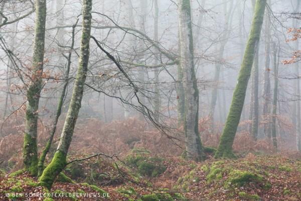 Bäume im Nebel 0230