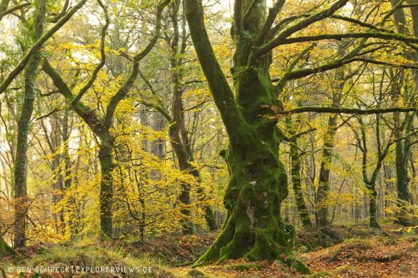 Goldener Herbst Normandie