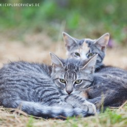 Katzen Kinder beim Dösen 8440