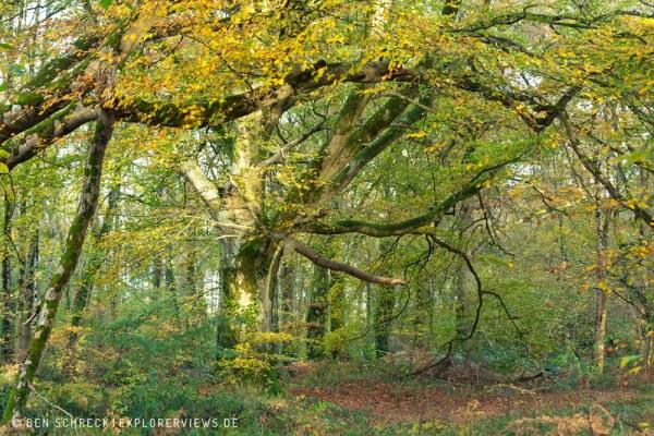Normandie Herbst 9244