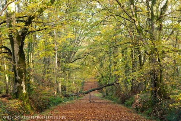 Waldweg im Herbst 9265