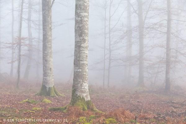 Geheimnisvoller Wald 3323