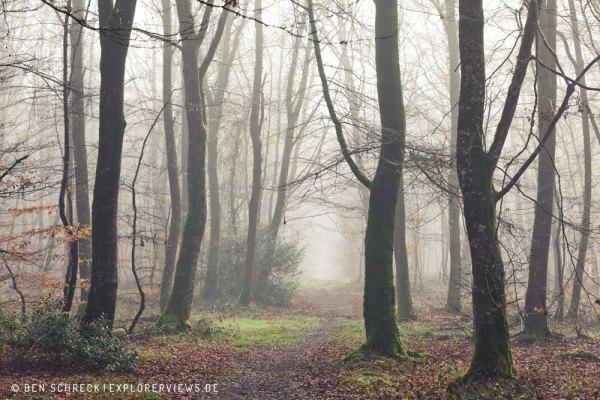 mystischer Nebelwald 3353