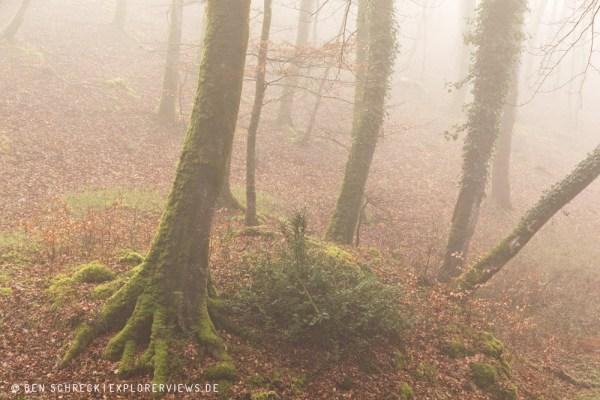 mystischer Nebelwald 3315
