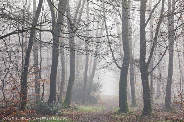 Weg durch Nebelwald 3348-3
