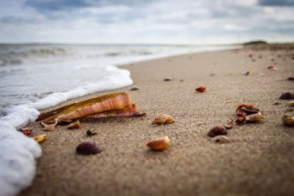 Seashells on shore