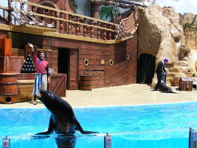 Sea lion show at Sea World FL