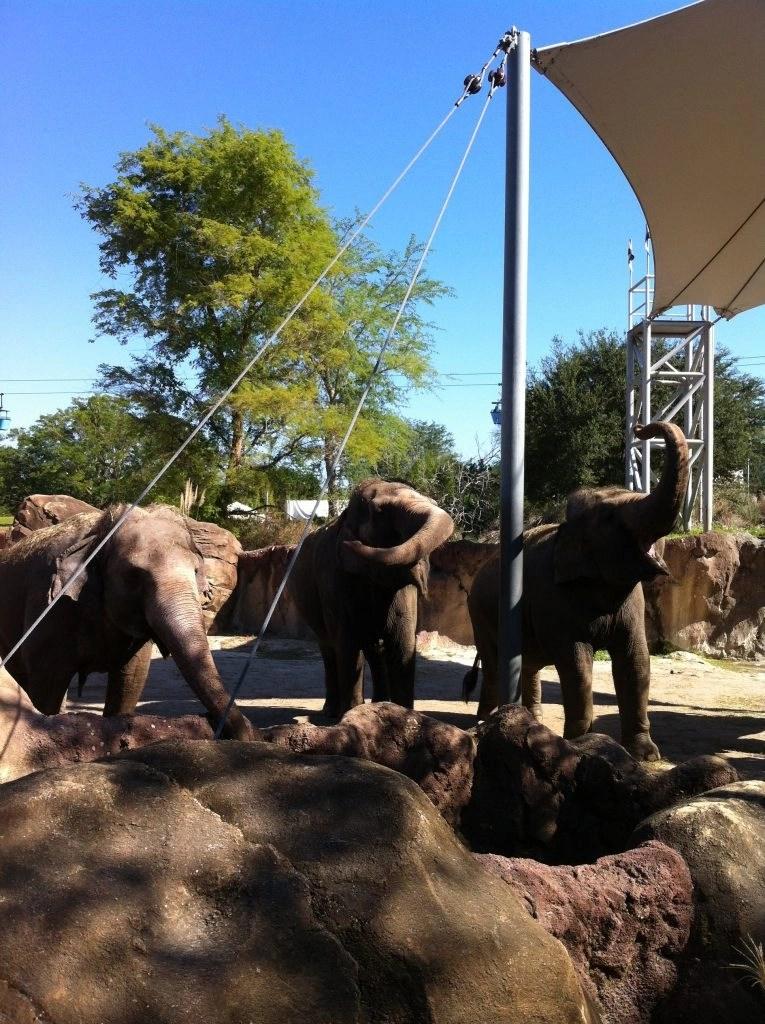 three elephants at Busch Gardens FL