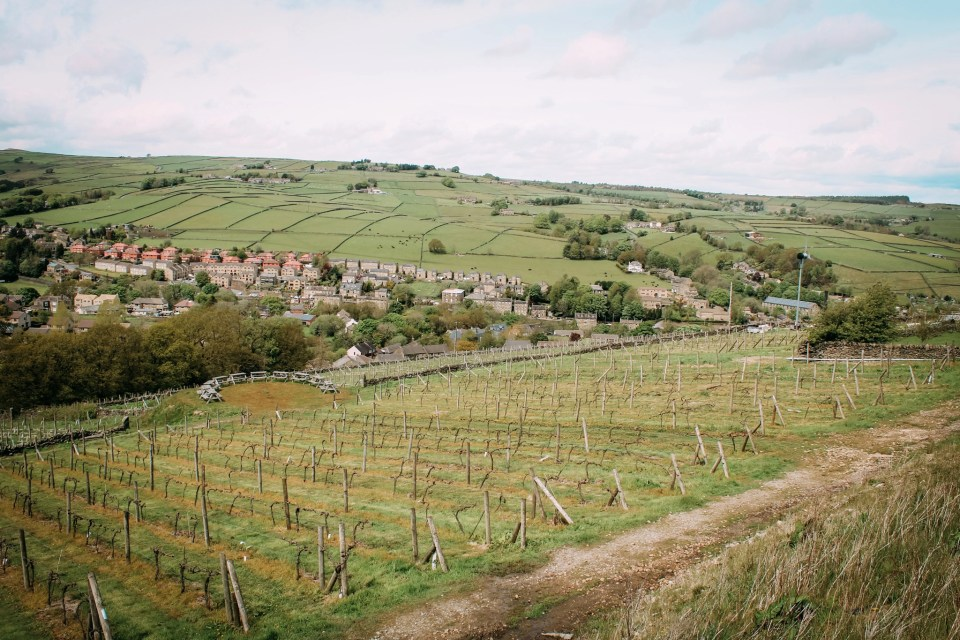 shows a vineyard in Holmfirth England which hosts wine tastings