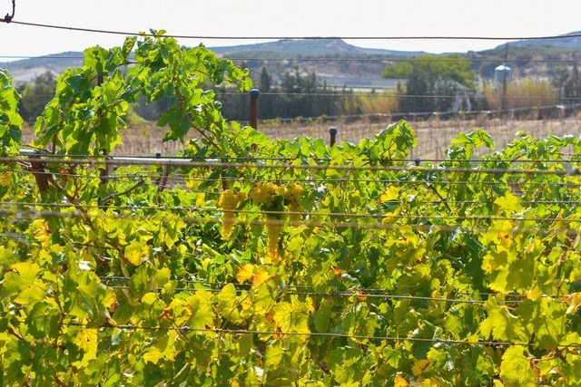 vineyards near me on the island of Crete in Greece