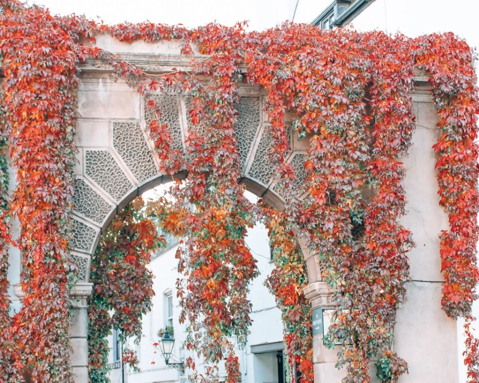 fall foliage draped over buildings in Kynance Mews, London