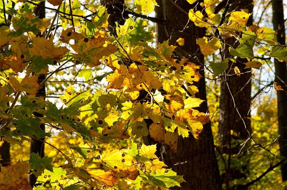 fall foliage in tasmania