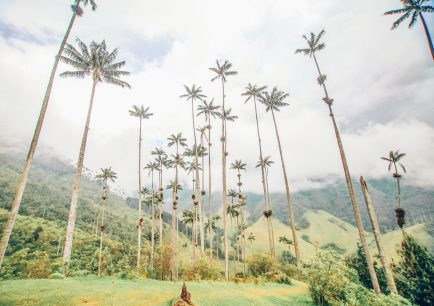 Salento Colombia tallest palms trees in the world